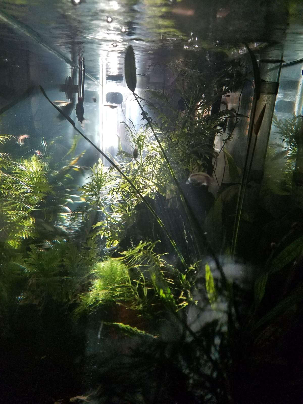 http://uploads.bmxmuseum.com/user-images/250844/20180415_0707535aed15d0eb.jpg